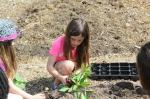Planting...